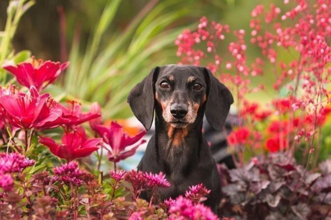 Aiandus ja lemmikloomad