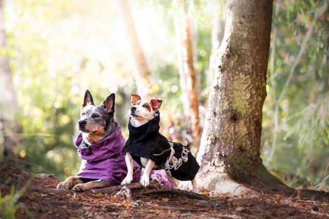 PetCity uued superstaarid – Bixie ja Bonna