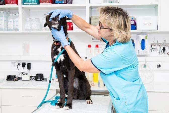 PetCity kliinikud – lemmikute ravi viie tärni tasemel