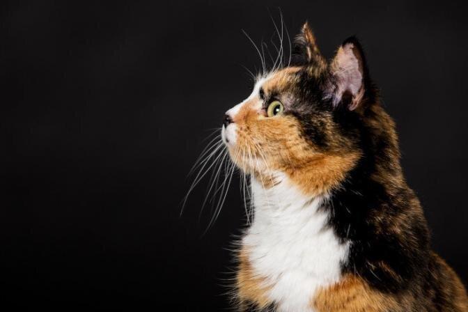 Kui tihti kassi pesta?