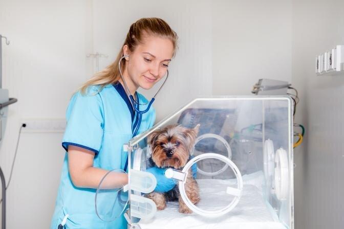 Lemmikloomade kiirabi PetCitys