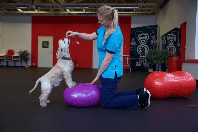 Füsioteraapia aitab vana koera jalule