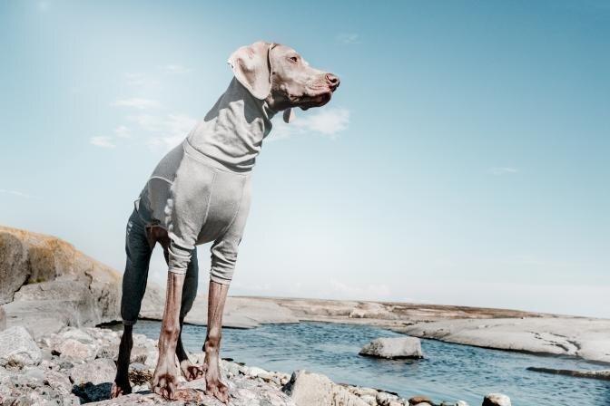 Koera riietamise ABC