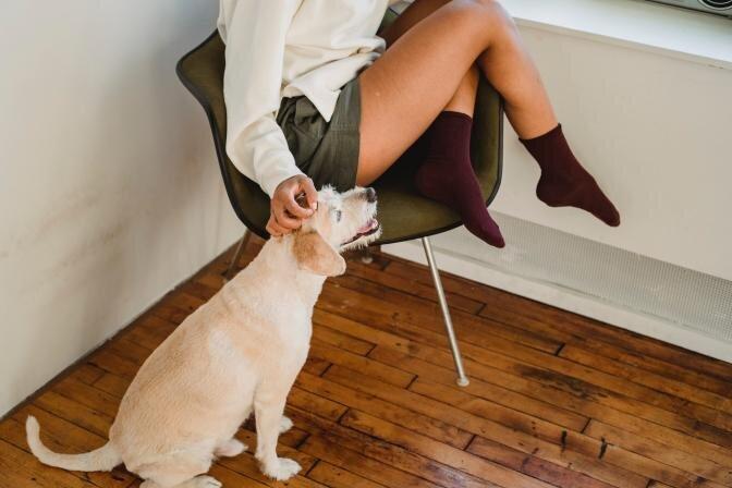 Elu neeruhaige koeraga - kuidas valida sobivaim toit