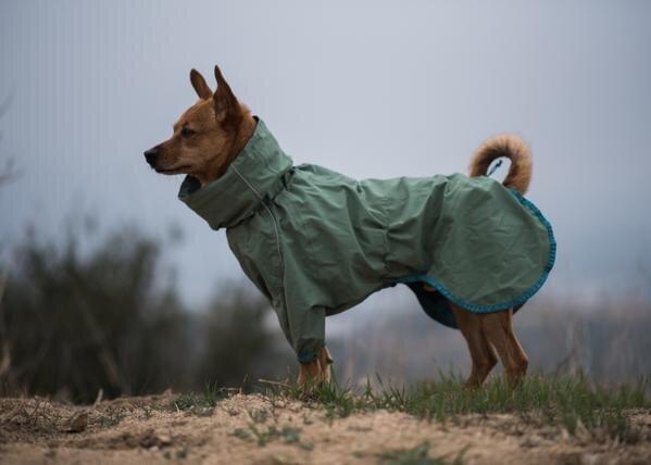Ettevaatust, õues on pime ja külm! Lemmiku riietamise ja ohutuse ABC