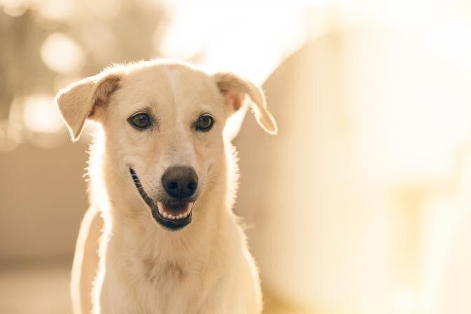 Kuidas koerale ja kassile kuivtoitu valida