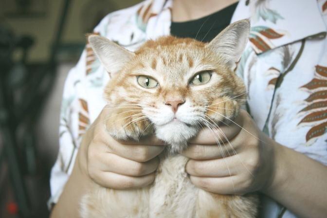 Kuidas koerte ja kasside küüsi lõigata