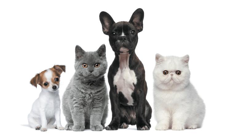 Eestis saab lemmikloomale teha hemodialüüsi