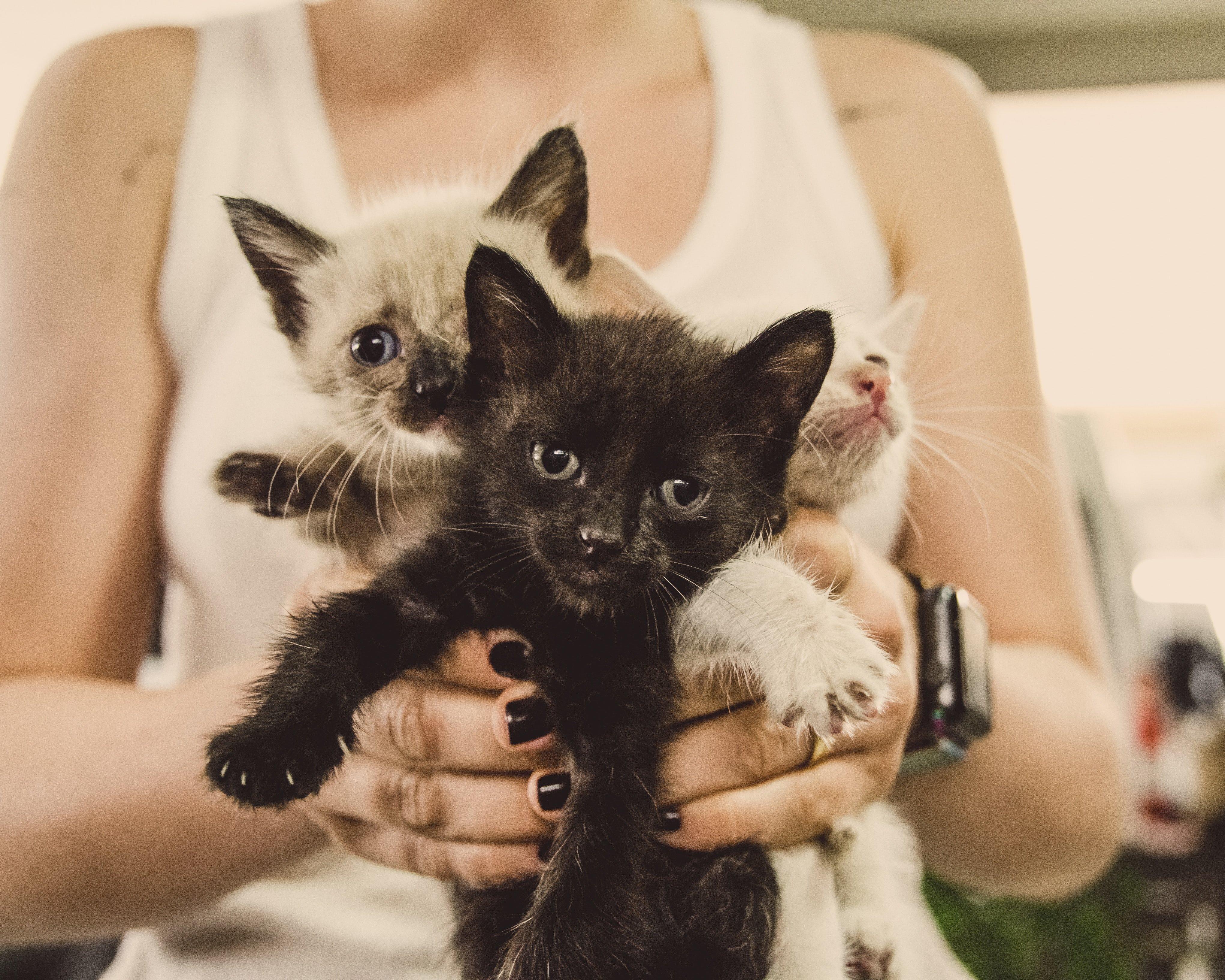 Lemmikloomade sise- ja välisparasiiditõrje