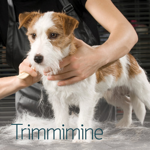 PetCity grooming - trimmimine
